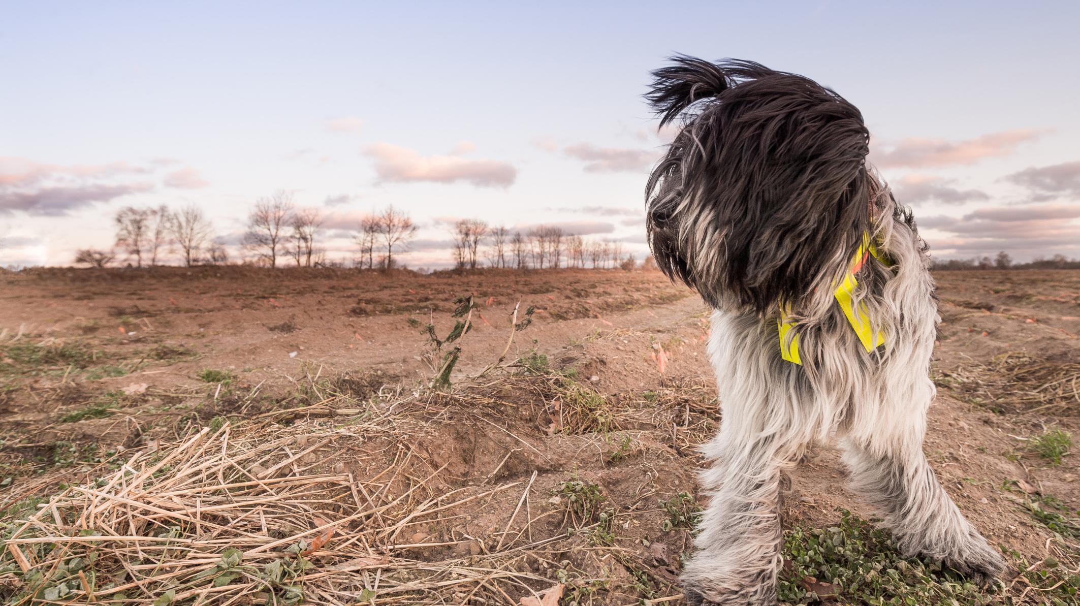 rare dog names - HD2126×1193