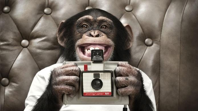 The monkey that took a selfie