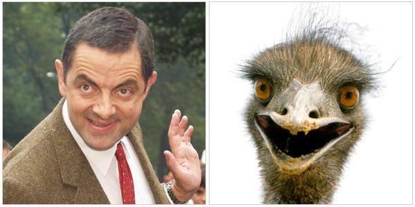 Celebrities that resemble animals