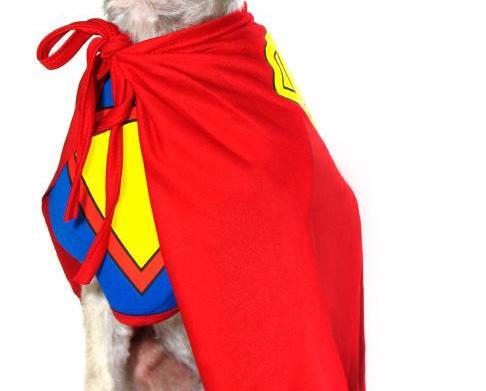 5 Most awww-inspiring pet hero stories