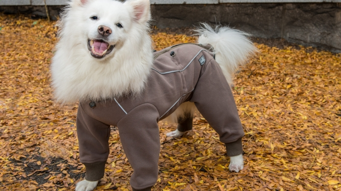 50 Adorable dog coats to keep