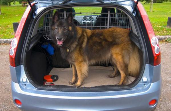 Pet safety in your car