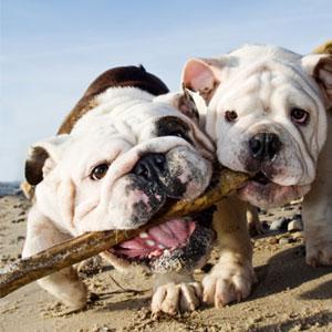 Top 10 dog beaches around the