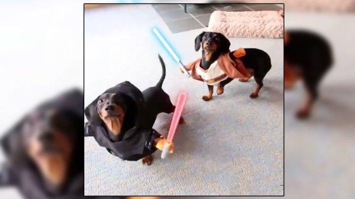 Watch Star Wars dachshunds bring balance
