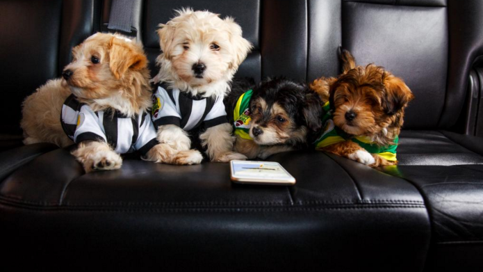 Uber is delivering puppies to offices