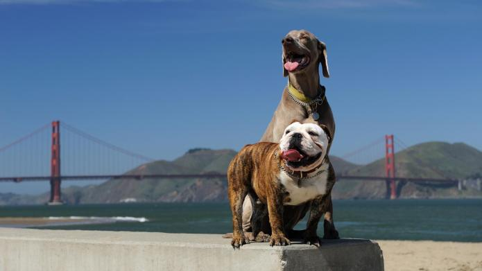 5 Best cities for pet-friendly vacations