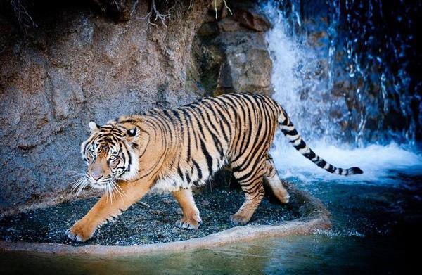 Visit Point Definance Zoo and Aquarium