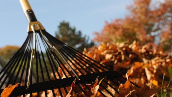 Tips for Raking Leaves