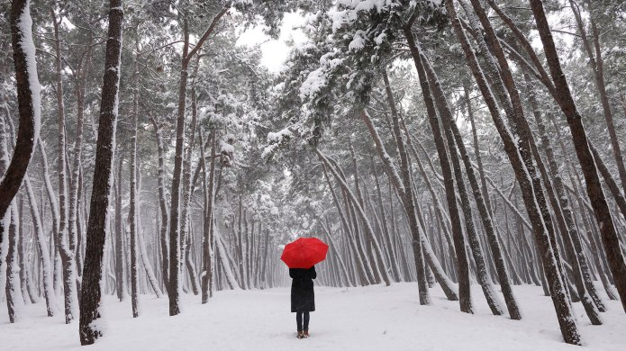 Woman standing in snowy forest holding