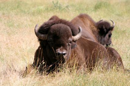 Northwest Trek Wildlife Park – Eatonville,