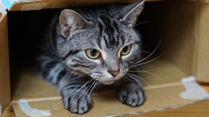4 Explanations for why cats love