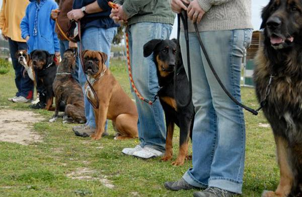 Citizen training: Certifying your dog as
