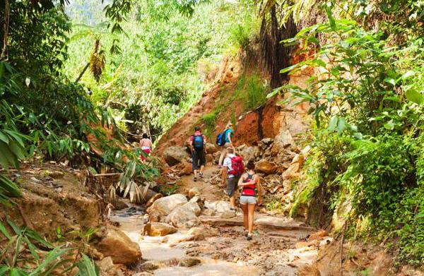Frequent Flier: Hiking Malaysia's Cameron Highlands