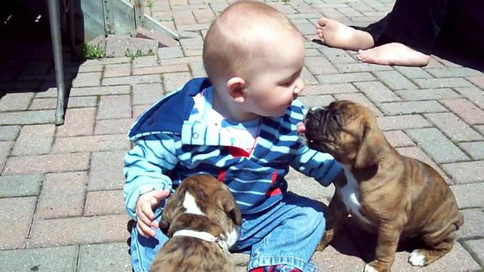 10 Cutest Youtube Videos Of Puppies Cuddling Babies Sheknows