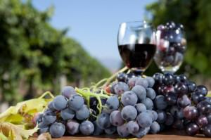 3 Earth-friendly wines