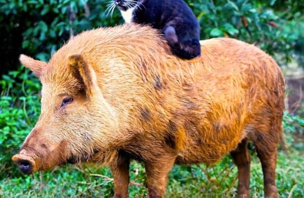 12 Animals that ride other animals
