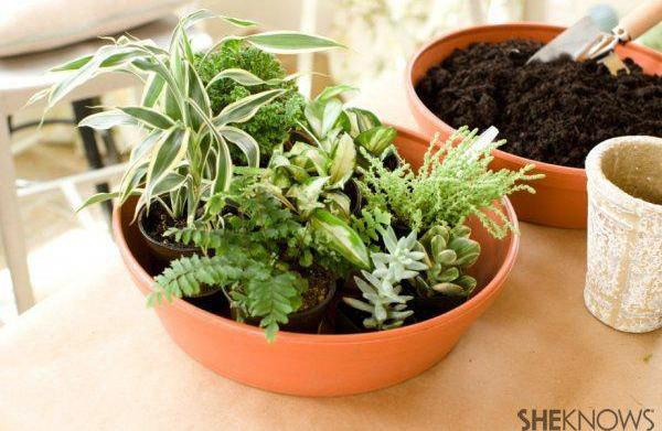 This DIY terrarium will make summer