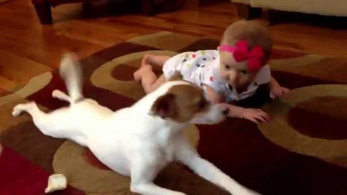 Rough day? Here are dogs teaching