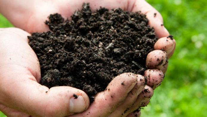 Soil Inoculants