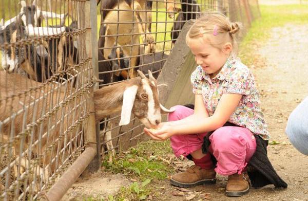 Best zoos, aquariums & farms in
