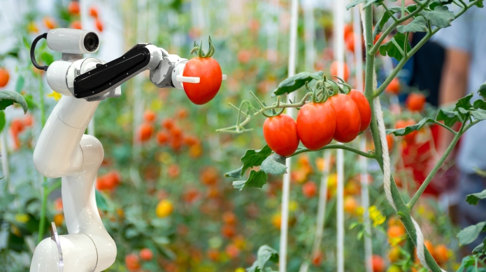 Close-Up Of Robotic Arm Holding Tomato