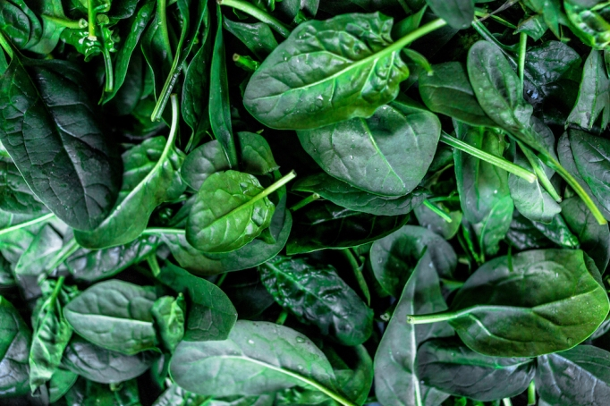close-up photo of spinach