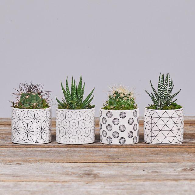 Quinn mini succulents