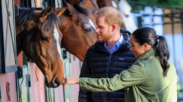 Meghan Markle and Prince Harry pet horses