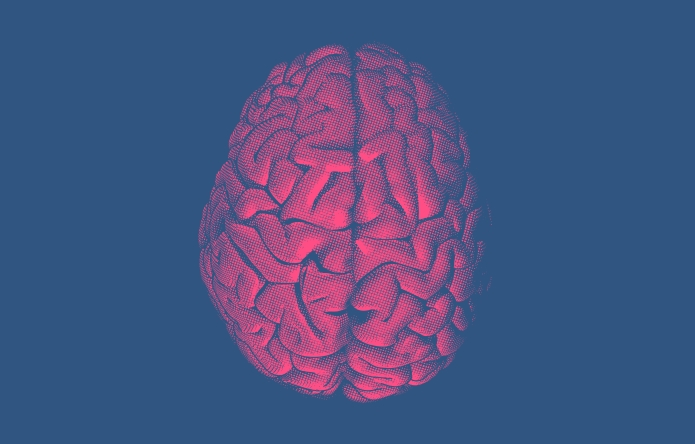 A pink human brain on a