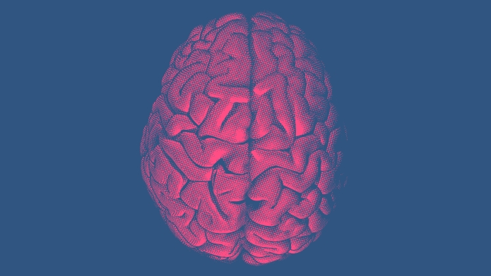 A pink human brain on a