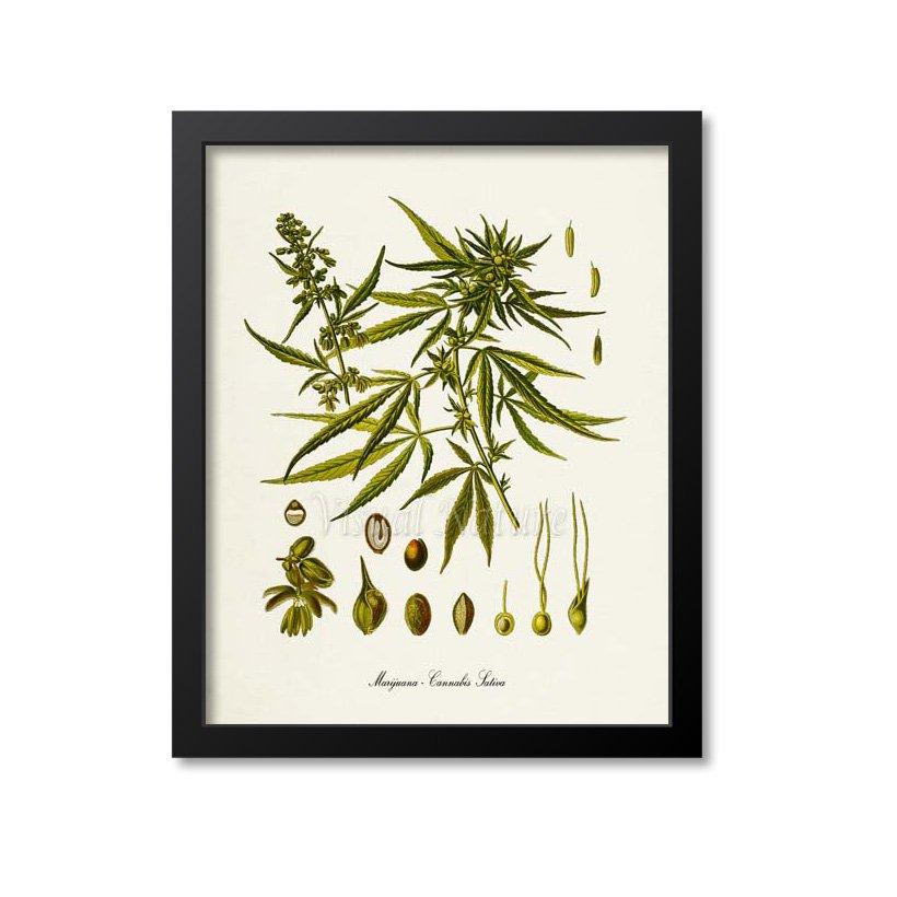 Gifts for Pot-Smoking Moms: Marijuana Botanical Print