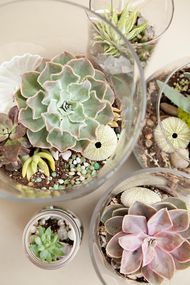Easy Gardening Tutorials: DIY Beachy Terrarium