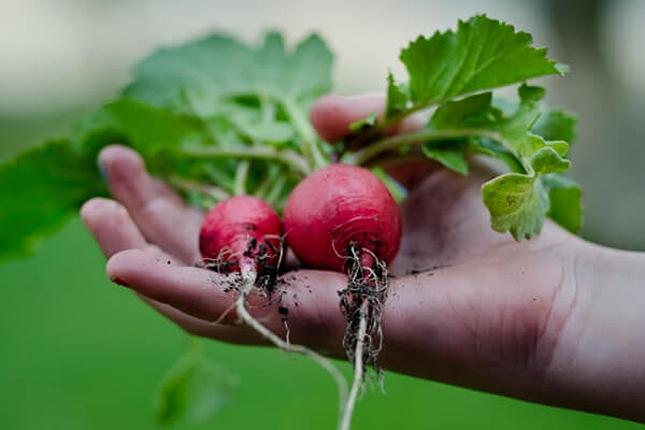 Easy Gardening Tutorials: DIY Radish Garden