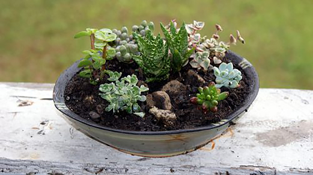 Easy Gardening Tutorials: DIY Succulent Container Garden