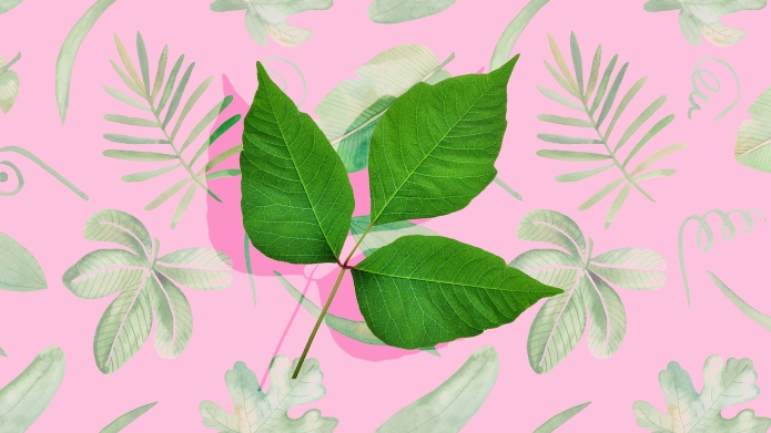 6 Poisonous Plants Besides Poison Ivy