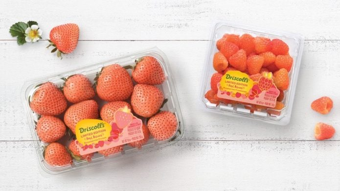 Driscoll's rose berries