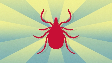 Illustration of a red tick