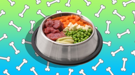 Yes, You Can Make Pet Food