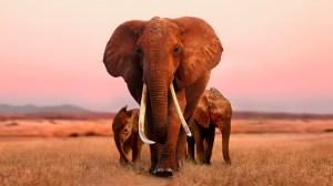 Apple TV's 'The Elephant Queen.'