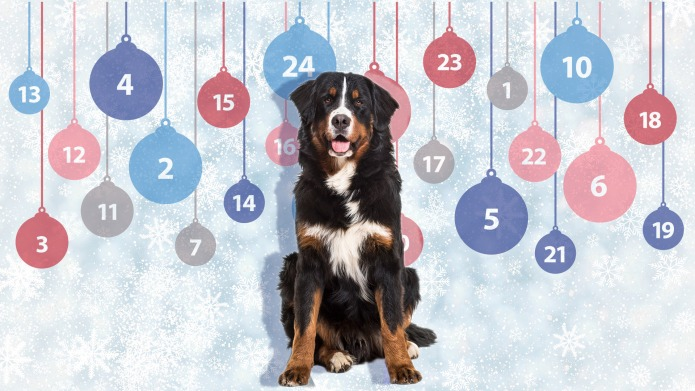 The Best Dog Holiday Advent Calendars