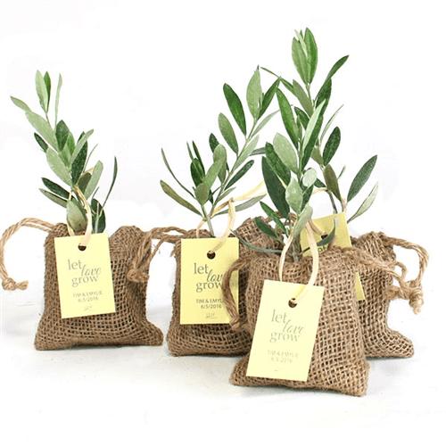 Olive Tree Favors