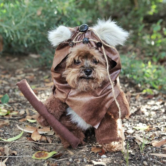 'Star Wars' Gift Idea: Ewok Dog Costume