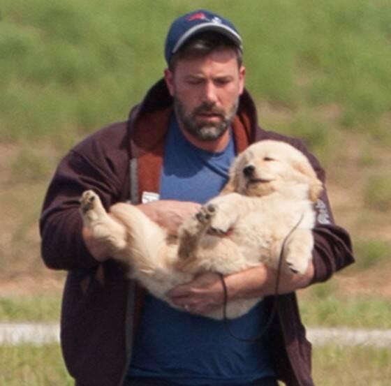 Ben Affleck with a Golden Retriever Puppy