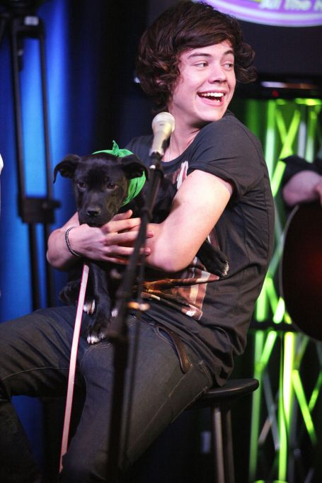 Harry Styles holding a puppy