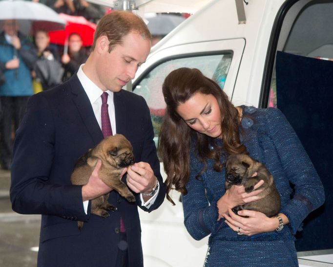 Prince William and Kate Middleton Holding Puppies