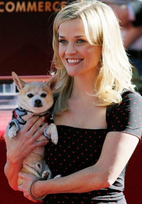 Reese Witherspoon with Chihuahua Puppy Bruiser