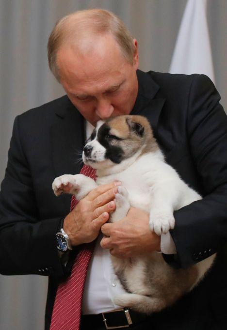 Vladimir Putin with a Big Puppy