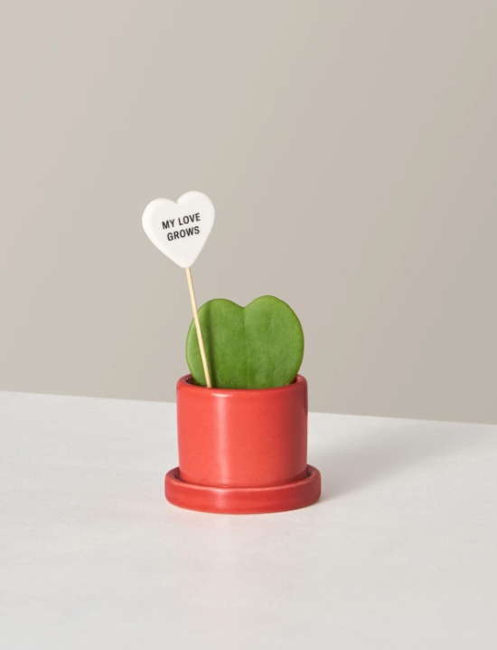 The Sill succulent valentine's day