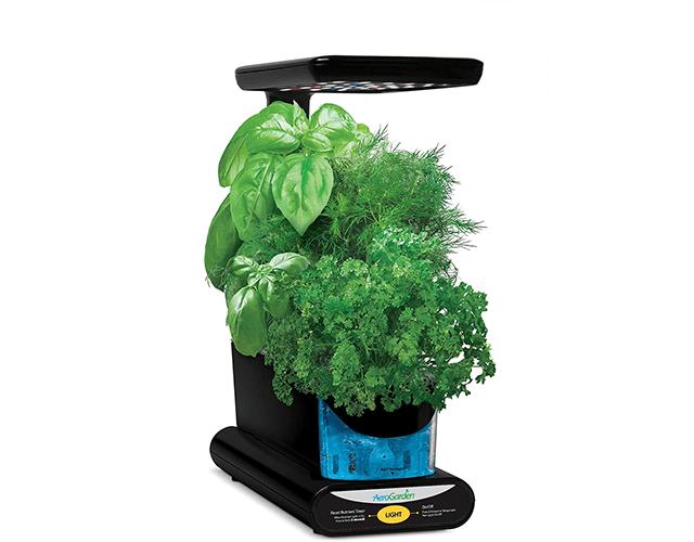 AeroGarden Best Herb Kit Amazon