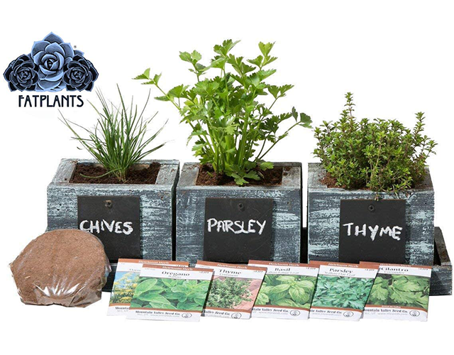 Fatplants Best Indoor Herb Kit on Amazon